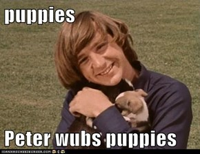 puppies  Peter wubs puppies