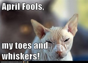 April Fools,  my toes and whiskers!