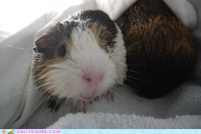Reader Squees: Squeaky Clean