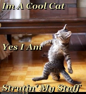 Im A Cool Cat Yes I Am Strutin' My Stuff