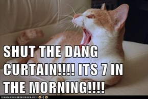 SHUT THE DANG CURTAIN!!!! ITS 7 IN THE MORNING!!!!