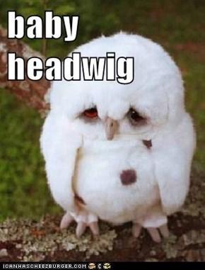 baby headwig