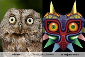 this owl Totally Looks Like the majoras mask