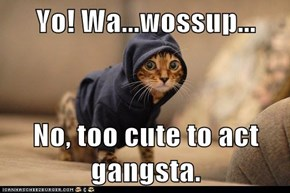 Yo! Wa...wossup...  No, too cute to act gangsta.