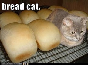 bread cat.