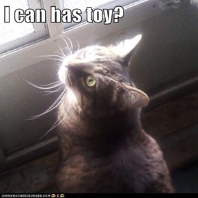 I can has toy?