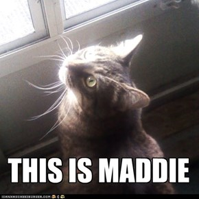 THIS IS MADDIE