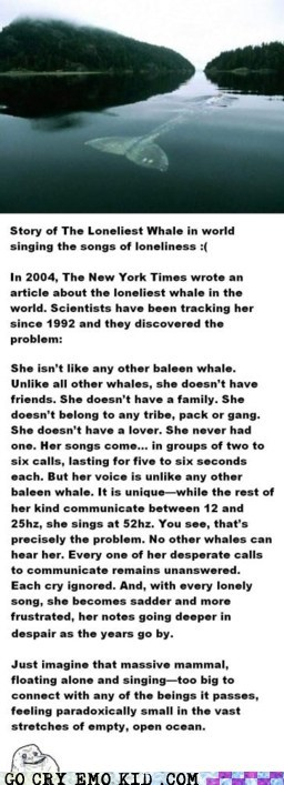 The Saddest Story Ever Whale Songed