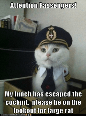 Captain Kitteh: Make Sure it Didn't Get into the In-Flight Meal