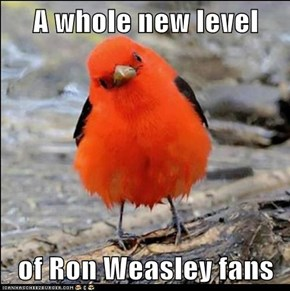 A whole new level   of Ron Weasley fans