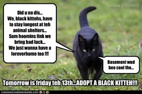 Tomorrow is friday teh 13th...ADOPT A BLACK KITTEH!!! part 2