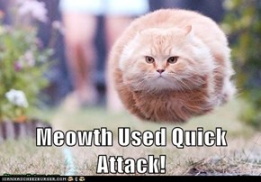 Meowth Used Quick Attack!
