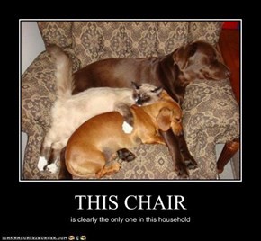 I Has A Hotdog: THIS CHAIR