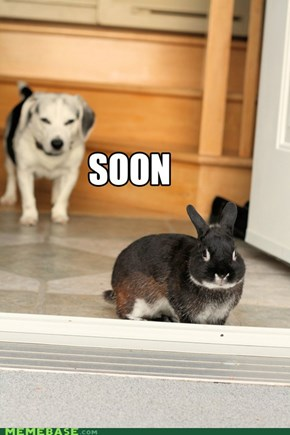 WATCH OUT BUNNY