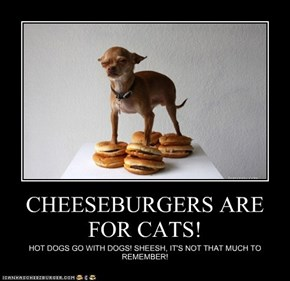 CHEESEBURGERS ARE FOR CATS!