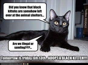 Tomorrow is friday teh 13th...ADOPT A BLACK KITTEH!!!