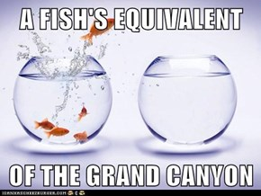 A FISH'S EQUIVALENT  OF THE GRAND CANYON