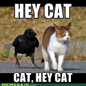 Hey Hey Cat
