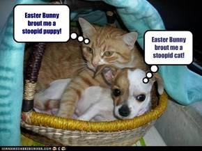 Easter Bunny brout me a stoopid puppy!