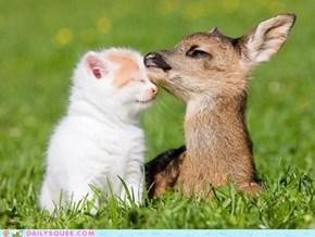 Interspecies Love: What a Deer