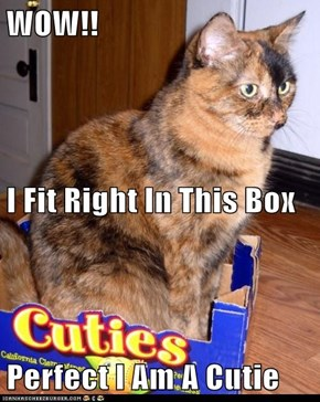 WOW!!  I Fit Right In This Box Perfect I Am A Cutie