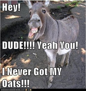 Hey! DUDE!!!! Yeah You! I Never Got MY Oats!!!