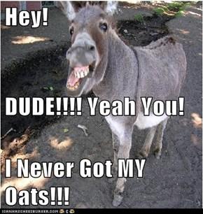Hey! DUDE!!!! Yeah You! I Never Got MY Oats!!!