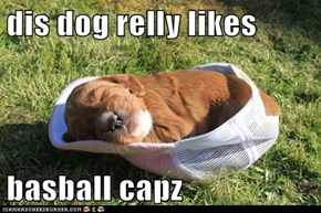 dis dog relly likes  basball capz
