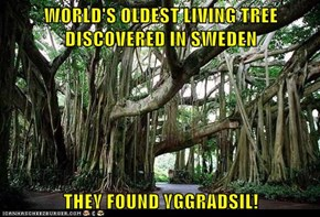 WORLD'S OLDEST LIVING TREE DISCOVERED IN SWEDEN  THEY FOUND YGGRADSIL!