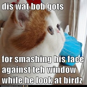 dis wat bob gots   for smashing his face against teh window while he look at birdz