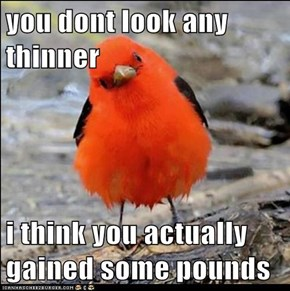 you dont look any thinner  i think you actually gained some pounds