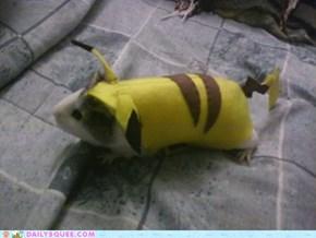 Pika Pig