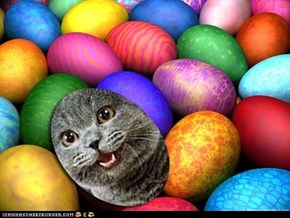 I Can Has Easter Egg Hunt?