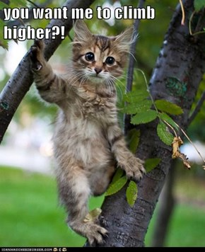 you want me to climb higher?!