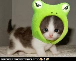 Grrr.... I a fierce kitty frog