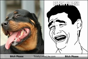 B*tch Please Dog Totally Looks Like B*tch Please Meme