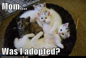 Mom....  Was I adopted?