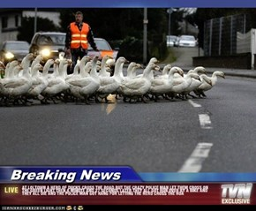 Breaking News - AT LOLTOWN A HERD OF DUCKS CROSS THE ROAD BUT THE CRAZY POLICE MAN LET THEM CROSS ON THE GREEN LIGHT THEN A MINUTE AND 27 SECONDS LATER THEY ALL GOT RUN OVER BY A BIKE AND THEY ALL DIE AND THE POLICE MAN GOT HANG FOR LETTING THE HERD CROSS