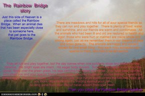 The Rainbow Bridge, author unknown, from www.actioncat.com