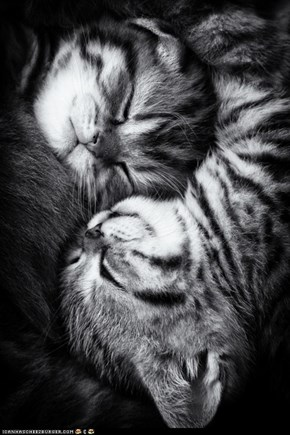 Cyoot Kittehs of teh Day: Dreaming in Black and White