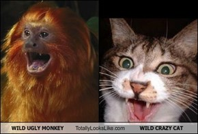 WILD UGLY MONKEY Totally Looks Like WILD CRAZY CAT