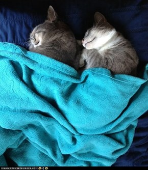 Cyoot Kittehs of teh Day: Snug as Two Bugs