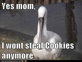 Yes mom,  I wont steal Cookies anymore