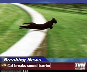 Breaking News - Cat breaks sound barrier