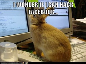 I WONDER IF I CAN HACK FACEBOOK...