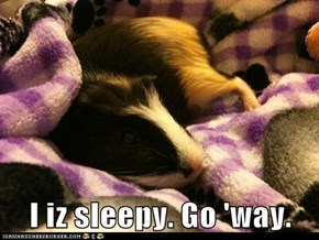 I iz sleepy. Go 'way.