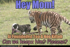 Animal Capshunz: Sure, Kittehs Are Always Welcome HereeeeeEEEEEEEK!!