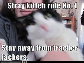 Stray kitteh rule No. 1  Stay away from tracker jackers.