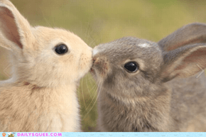 Daily Squee: Kissy Kiss