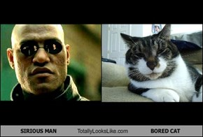 SIRIOUS MAN Totally Looks Like BORED CAT
